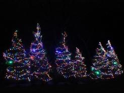 holiday-tree-lights-winnetka