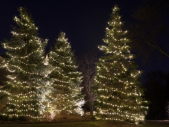 christmas-tree-lights-glenn-ellyn