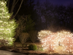 christmas-mini-lights-st-charles