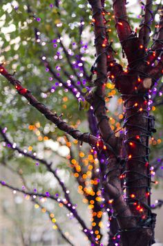 Want this charming look for your trees this Halloween? We've got purple & orange lights that will make your trees shine bright with fall spirit!